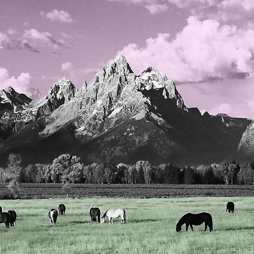 Alliance Kone - Yellowstone