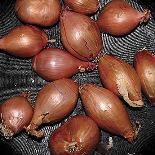Alliance Ty Segall - Fried Shallots