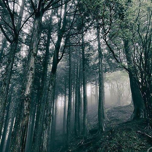 Alliance Akira Kosemura - In The Dark Woods
