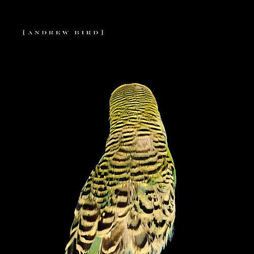 Alliance Andrew Bird - Armchair Apocrypha