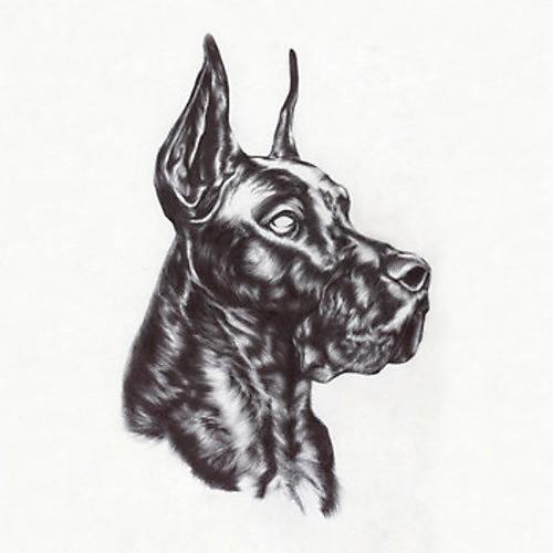 Alliance Great Dane - Alpha Dog
