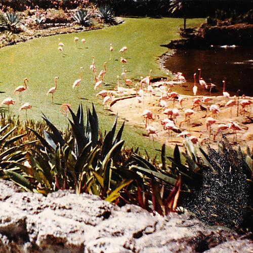 Alliance Imaginary Softwoods - Gold Fiction Loop Garden