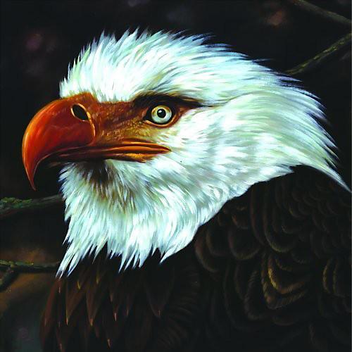 Alliance Mogwai - Hawk Is Howling