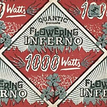 Quantic Presents Flowering Inferno - 1000 Watts