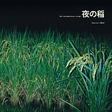 Rice Field Silently Riping in the Night