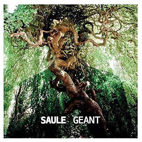 Alliance Saule - Geant