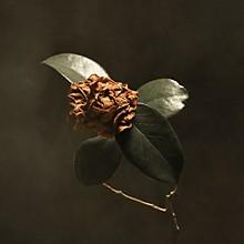 St Paul & the Broken Bones - Young Sick Camellia