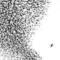 Alliance Wilco - Sky Blue Sky thumbnail