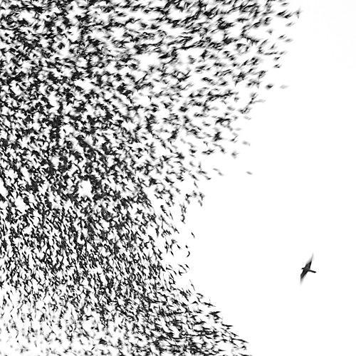 Alliance Wilco - Sky Blue Sky
