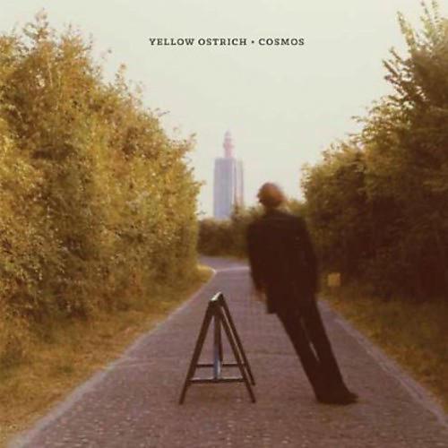 Alliance Yellow Ostrich - Cosmos